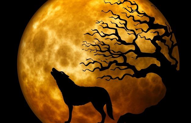wolf-963081_1920 moon